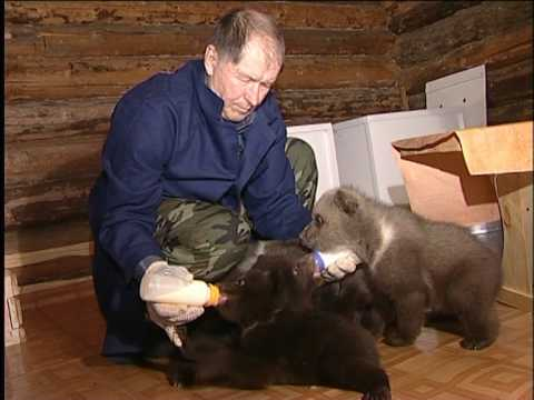 Друг Медведя