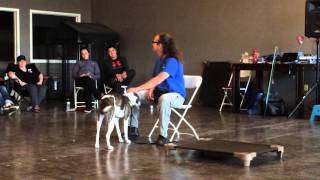 Clicker Training, for a touch sensitive dog first session
