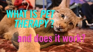 Can Our Pets Help us Feel Better? The Science of Animal Therapy