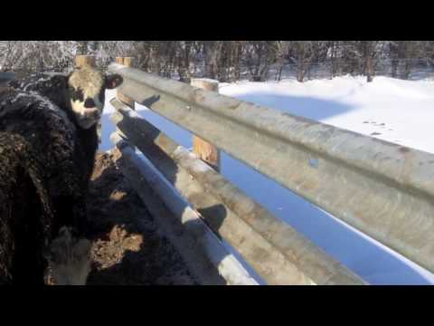 Used Guardrail Livestock Fencing Youtube