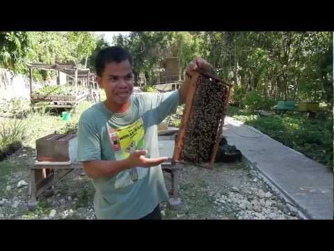 Bohol Bee Farm - Panglao Island Tour - WOW Philippines Travel Agency