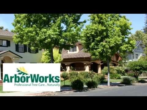 East Bay Tree Service Review | ArborWorks, Dublin CA 800-936-8733