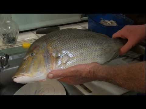How to Gut, Gill & Fillet a Spangled Emperor.