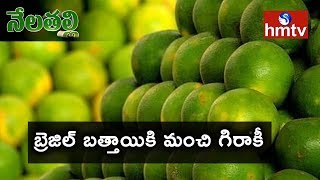 Telangana State Horticulture Department Special Focus On Brazil Mosambi Fruit | hmtv