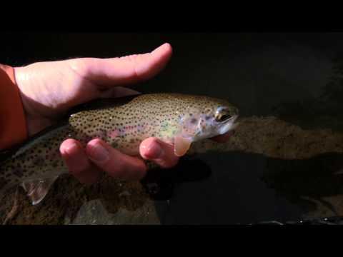 Colorado Fly Fishing 2/24/15
