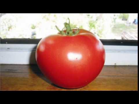 tomato body shape hypnosis