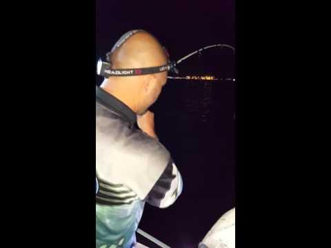rabye hooking a nice 87cm jew on a 2-4kg rod.