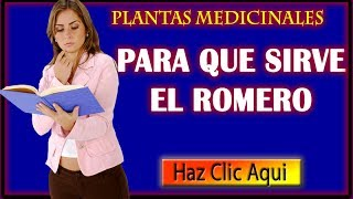 Para que sirve el romero, Sus Propiedades Curativas y Medicinales