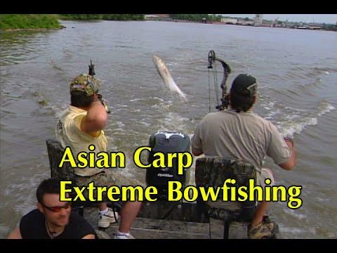 Asian Carp Extreme Bowfishing