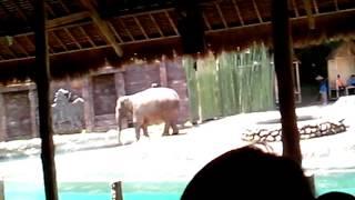 download lagu Elephant Show Taman Safari Bali gratis