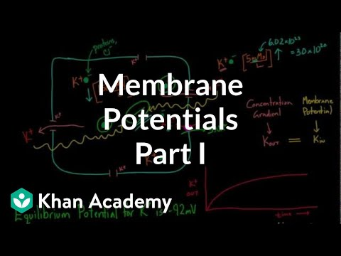 Membrane Potentials - Part 1
