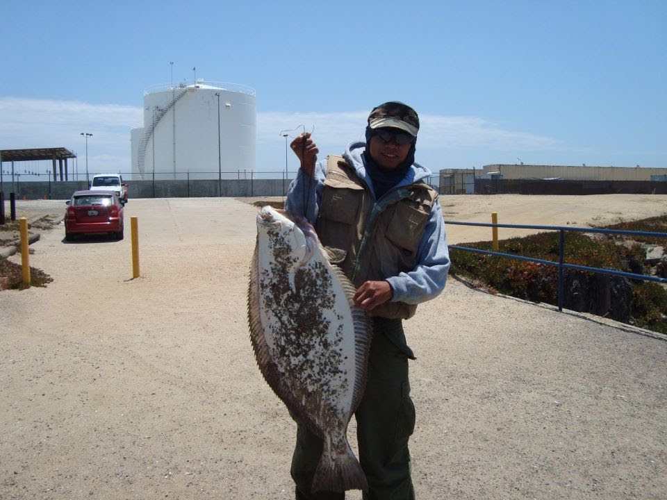 San diego fishing july giant halibut caught in san for Fishing license san diego