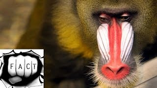 Top 10 Most Amazing Monkeys In The World