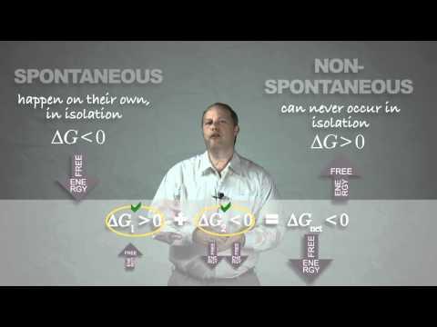 Thermodynamic Free Energy