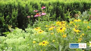 Late Summer Blooming Perennials