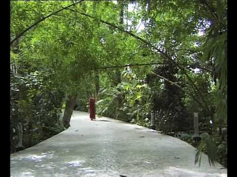 OSHO: The Silent Explosion – a visit to the Osho International Meditation Resort