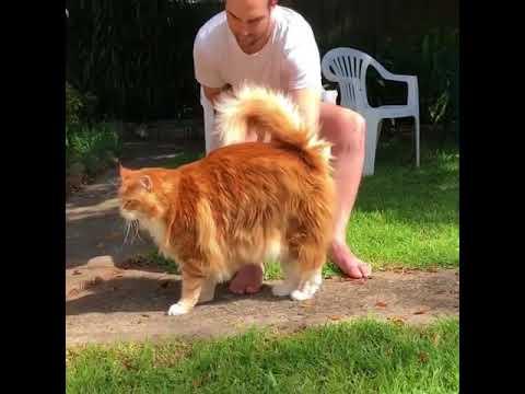 Котики милота Приколы с котами и кошками — Смешные коты и кошки 2017 ? КОТЫ ПРИКОЛЫ 2017 #6
