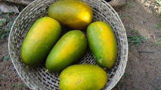 Village Foods ❤ Organic Kekiri (Melon) curry prepared in my Village by my Mom