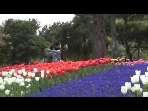 parque de tulipanes kisosansenkoen gifu japon 木曽三川公園