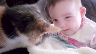 Baby Playing With Cats Fun And Fails । Funny Baby Fun And Enjoy