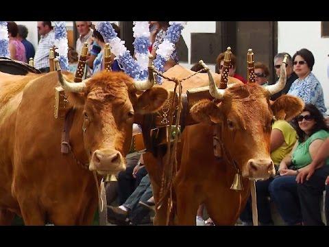 Bodo de Leite das Festas da Agualva 2014