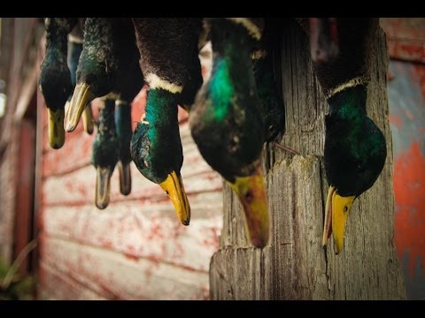 Duck Hunting and Goose Hunting - The 2013-2014 Waterfowl Season - Fowled Reality 3.0