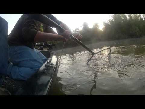 Catfishing :Trotlining for Flatheads!!!