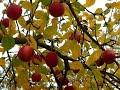 Золотая осень Звуки природы mp3