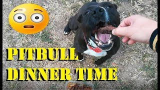 FUNNY PITBULL - FEEDING THE BEAST - HRĂNIM BESTIA 😂🤣
