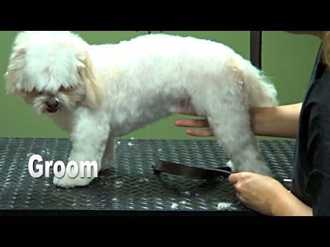 How to Groom a Shih Tzu (Puppy Cut) Do-It-Yourself Dog Grooming