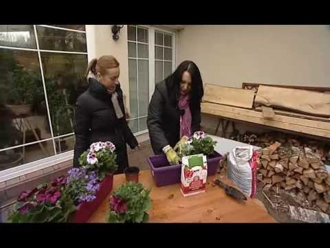 Výsadba balkónových květin