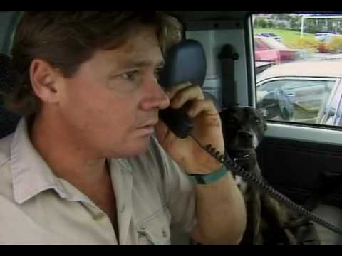 The Crocodile Hunter:Steve's Story (4/8)