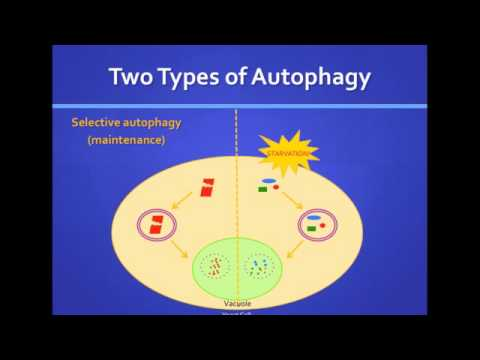 Katie Parzych: Autophagy: How Cells Recycle to Survive