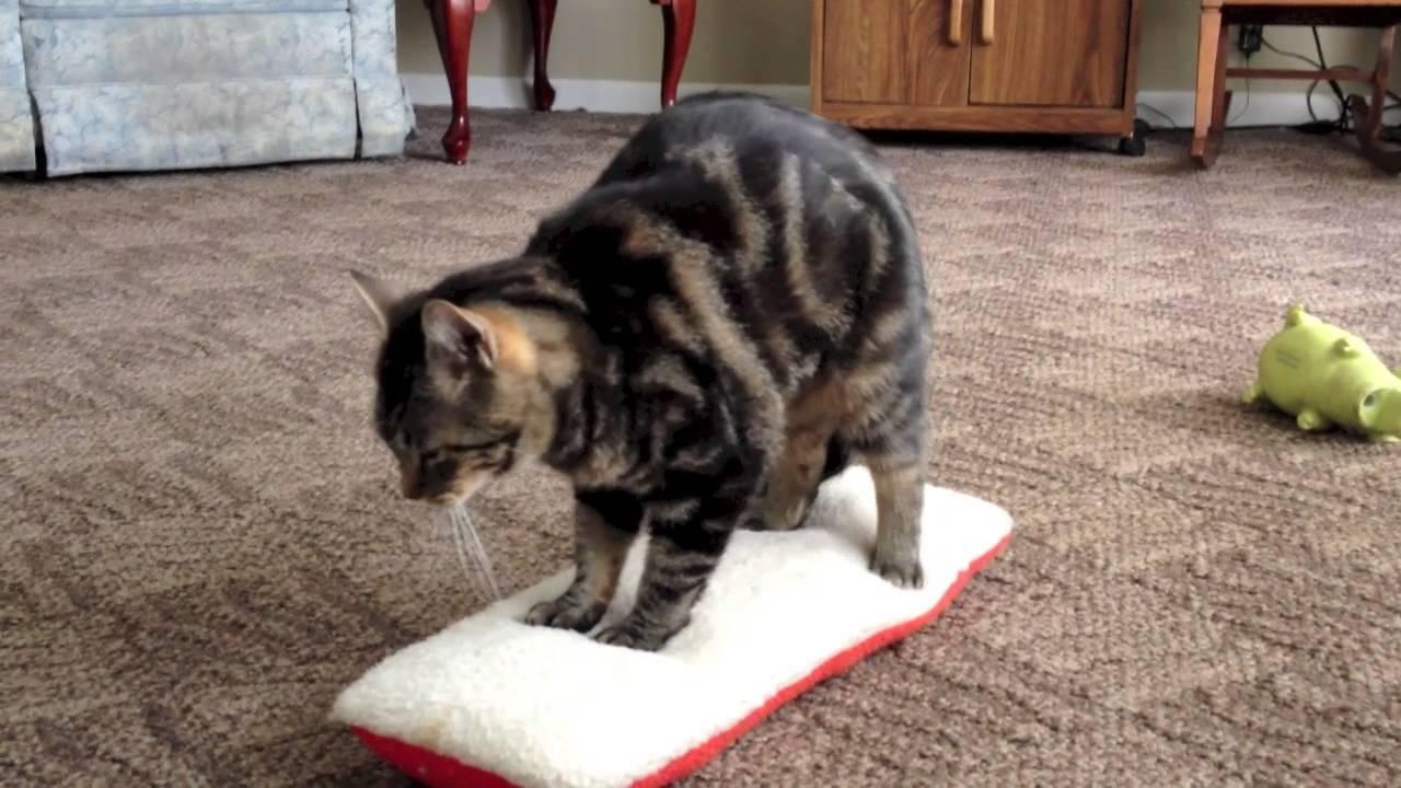 cat nip and toys