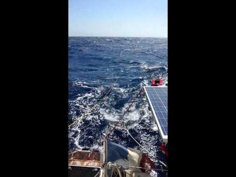 Traversée Ajaccio/Cassis à la nage