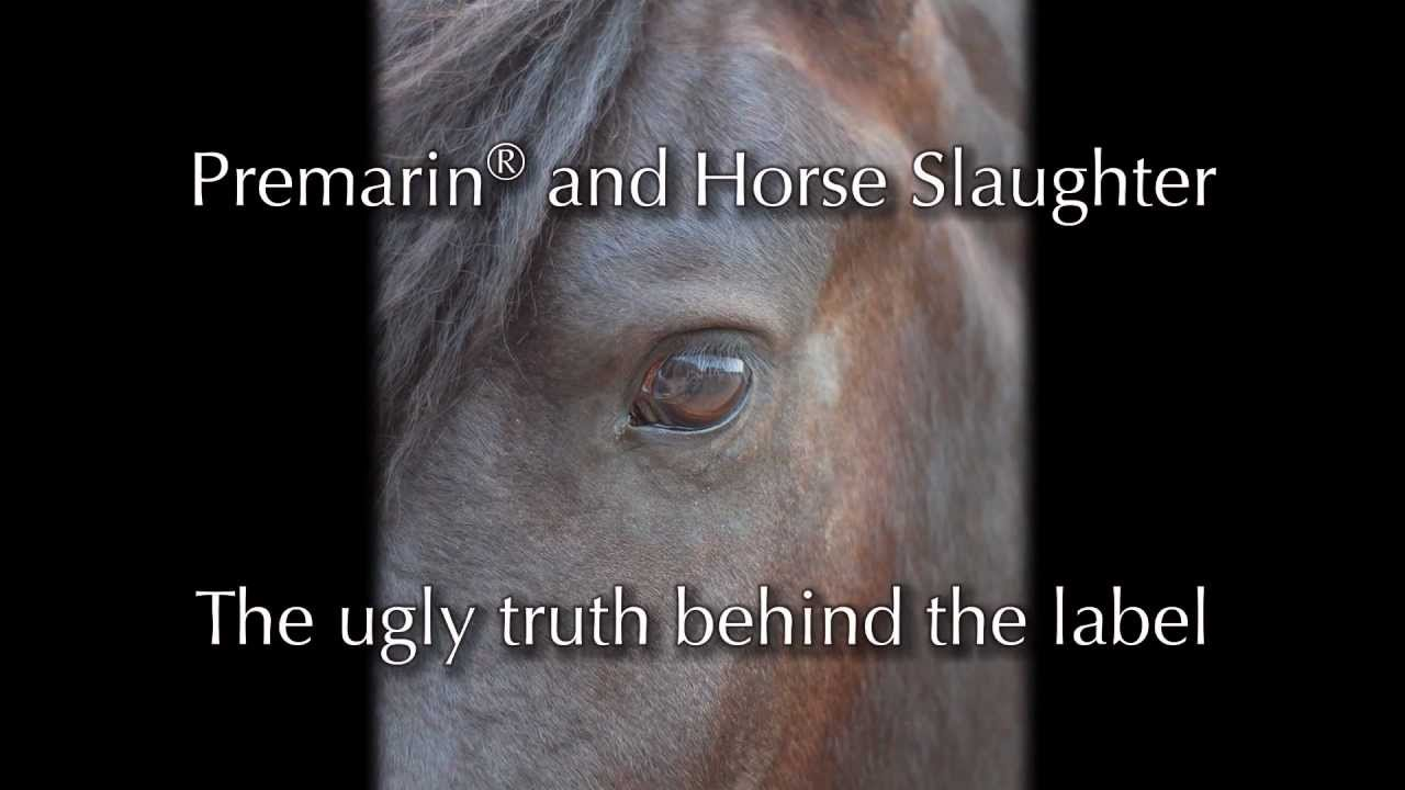 horse slaughter the truth unveiled Ok let me say this first: there are many varying opinions about horse slaughter and i respect that in my college writing class we were asked to write.