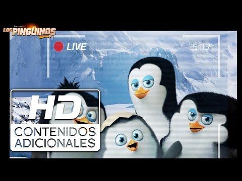 Los Pingüinos de Madagascar | Documental de la Antártida