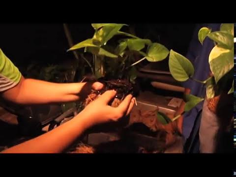 Maunabo Artesania en Coco
