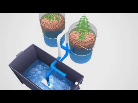 Super Simple Ebb &#038; Flow Hydroponics System