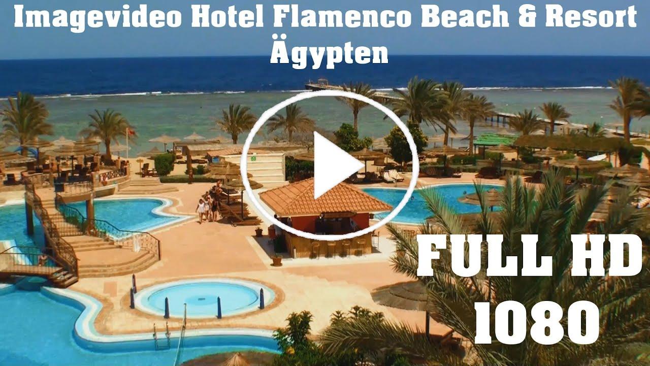 Flamenco Beach Resort Hotel Imagevideo Egypt Tauchen
