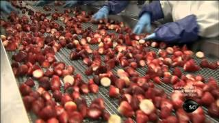 How It's Made - Frozen Fruit