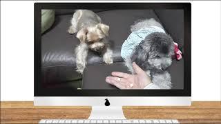 【FDNリモートニュース】おやつを奪われた犬