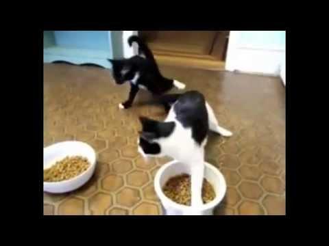 Котята после кошачьей мяты