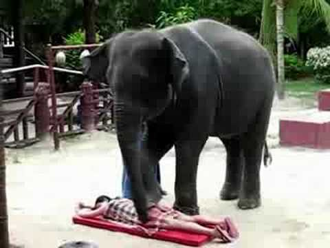 Elephant Massage Girls Back video