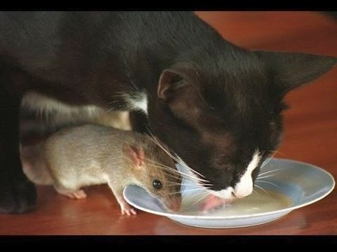 Cat & Mouse are best of friends despite all odds