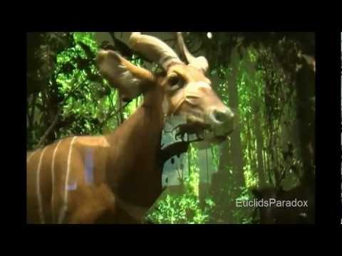 Tour of Houston Museum of Natural Science