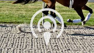 Podcast (audio only): Mysterious racehorse injuries, and reforming the U.S. bail system