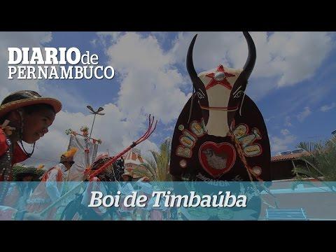 Carnaval 2015: Boi de Timbaúba