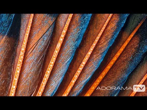 Macro Photography: You Keep Shooting with Bryan Peterson