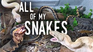 Feeding ALL of my SNAKES (Featuring my New COTTONMOUTH!)